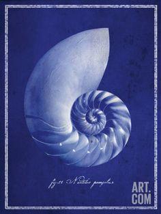 Nautilus Shell Art Print at Art.com