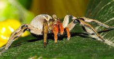 Gilberto Hayne Brito, aluno do IF, levou a foto da semana com a imagem desta aranha que parece ser enorme! www.flickr.com/photos/ghbrito/ #if #institutodefotografia #fotodoaluno #fotodoalunodasemana #fotografia #cursoonline #formação