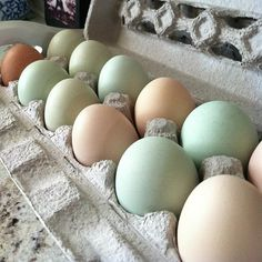 Nature made Easter eggs. Thanks to the chicks at Oyster River winegrowers! #organic #farm #chickens by thetravelingpear, via Flickr