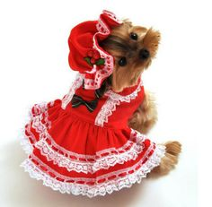 The Candy Cane Cutie Christmas Dog Costume, includes v-shaped corset top, attached lace petticoat, apron with candy cane and bow applique, and adjustable drawstring bonnet hat with mistletoe detail. Easy to wear front closure.