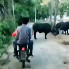 Super Funny Videos, Funny Video Memes, Crazy Funny Memes, Funny Short Videos, Really Funny Memes, Funny Animal Videos, Funny Relatable Memes, Stupid Funny, Funny Animals