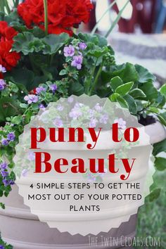 Perfect potted plant combinations and the best way to care for your plants so they last all season. Outdoor Flowers, Outdoor Planters, Easy Garden, Garden Pots, Garden Ideas, Garden Globes, Garden Bed, Patio Ideas, Organic Gardening