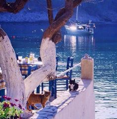 Greek seaside tavern… Kefalonia island,Greece - Greek highlights
