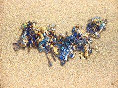 'Strandgut-Stilleben 1/8' von Dirk h. Wendt bei artflakes.com als Poster oder Kunstdruck $19.41