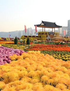 Festival de Crisantemos Gagopa de Changwon (창원 가고파국화축제)