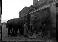 1946 12-15-1946_00740A Olifanten van Circus Knie    Aankomst per spoor van de olifanten van Circus Knie, voor pakhuis Zondag en Maandag aan de Cruquiusweg, Amsterdam, 15 december 1946  Foto Ben van Meerendonk / AHF, collectie IISG, Amsterdam