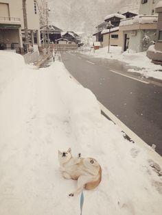 スズ。散歩の途中。