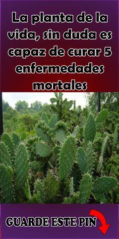 Tapas, Medicine, Herbs, Website, Plants, Decoupage, Wallpapers, Health Care, Health Remedies