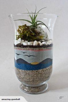 New Tall Glass Vase Tillandsia Terrarium | Trade Me