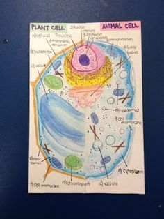 Making a Lapbook for Plant and Animal Cells - WeHaveKids - Family Science Cells, Science Biology, Science Lessons, Science Education, Life Science, Science Ideas, Cell Biology, Forensic Science, Science Projects