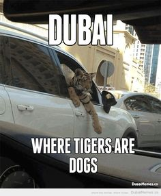 Dubai... Where Tigers Are Dogs  Why do I want to go there?? I HATE cats!!
