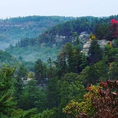 Red River Gorge KY on a fall morning[2268x2268][OC]