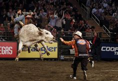Rodeo - Bull Riding Top Pictures