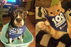 Repin this photo to vote for Layla & Alice in the Liquid Web Pet Contest!