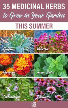 Spice Garden, Veg Garden, Garden Plants, Vegetable Gardening, Organic Gardening, Medicine Garden, Herbal Medicine, Healing Herbs, Medicinal Plants