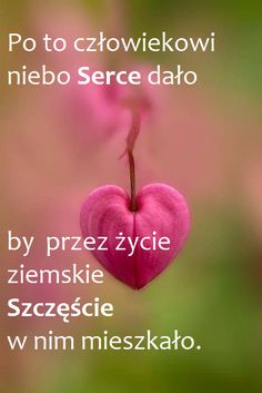 Motto, Good Morning, It Hurts, Apple, Quotes, Pictures, Amor, Quote, Polish Sayings