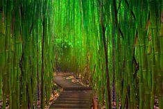 the snorkel store bamboo pipiwai 2
