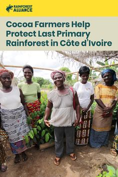 The Rainforest Alliance is helping cocoa farmers around Côte d'Ivoire's Tai National Park increase their income and conserve this precious ecosystem. Cocoa Plant, Integrated Pest Management, Farming Techniques, People Can Change, Soil Improvement, Sustainable Farming, True Relationship, Forced Labor, Ivoire