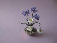 . Mini Fairy Garden, Fairy Gardens, Garden Art, Table Flower Arrangements, Table Flowers, Garden Container, Mini Plants, Miniature Plants, Miniature Dollhouse