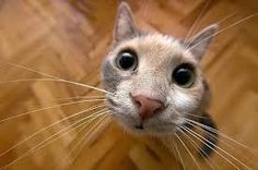 Look at my eyes... ONLY in my eyes.. Maybe at nose if you want :3