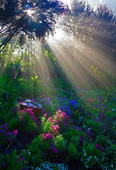 "you could think at the movie ""the secret garden"", it could posted right out of it, but this is the beauty of nature, not a fantasy; Sunbeams in the forest. Beautiful World, Beautiful Gardens, Beautiful Places, Trees Beautiful, Beautiful Morning, Beautiful Sunrise, All Nature, Amazing Nature, Autumn Nature"