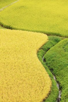 Beautiful rice field of the curve@ by nki-photography, via Flickr
