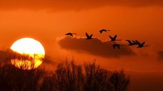 Terwijl de zon bewolkt ondergaat, maken deze zwanen nog even rondje. Prettige jaarwisseling allemaal. GroeTon.