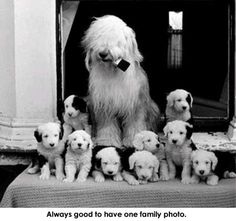 Everyone, I just got some amazing brand name purses,shoes,jewellery and a nice dress from here for CHEAP! If you buy, enter code:atPinterest to save http://www.superspringsales.com -   Old English Sheepdogs
