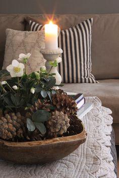 Sjarmerende jul: Julens planter