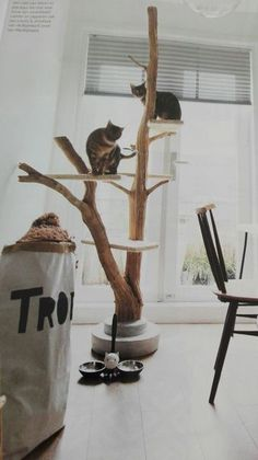 à chat Design www. griffoir Sisal, arbre à chat Hamac Sisal, Cat Playground, Playground Design, Diy Cat Tree, Cat Towers, Cat Shelves, Cat Room, Pet Furniture, Furniture Stores