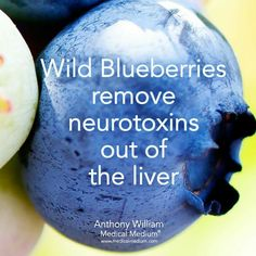 Liver Cleanse Detox Wild blueberries and your liver Liver Detox Drink, Detox Your Liver, Liver Detox Cleanse, Kidney Cleanse, Detox Drinks, Health Cleanse, Kidney Detox, Diet Detox, Natural Cleanse