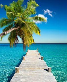 Dec 15 2019 - Coconut beach Self-Adhesive Wall Mural - Palm trees Summer Pictures, Beach Pictures, Poster Mural, Coconuts Beach, Tropical Beaches, Tropical Paradise, Paradise Travel, Ocean Beach, Blue Beach