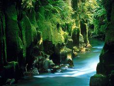 Floresta  Whirinaki, norte da Nova Zelândia.