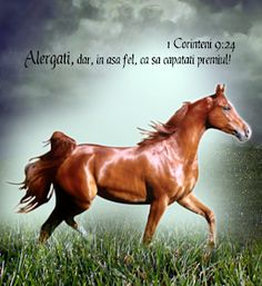 Versete de Aur : 01.11.2013 - 01.12.2013 Words In Other Languages, Meditation, Inspirational Quotes, Horses, Messages, Thoughts, Funny, Books, Bible
