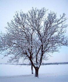 Vinter !!!  Af Sister Bonde