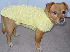 Small crocheted one piece dog sweater.