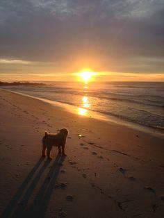 @ThatRascalRiley - Sunrise at the Beach