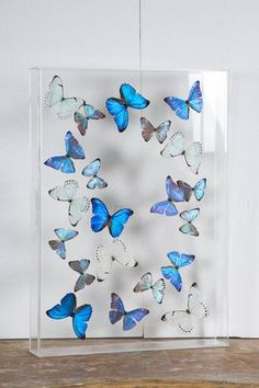 Flight of Morphos Butterflies in Lucite Case by Atelier L for Stéphane Olivier - Home decor - Artesanato Broken Glass Art, Sea Glass Art, Stained Glass Art, Water Glass, Butterfly Bedroom, Butterfly Wall Art, Acrylic Frames, Acrylic Box, Harry Potter Birthday Cards