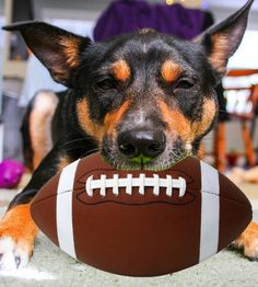 #SuperDogSunday: Submit a photo of your sporty dog