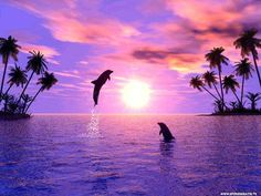 Dolphins leaping at sunset in purple ocean by palm trees Beautiful Sunset, Beautiful World, Beautiful Friend, Beautiful Creatures, Animals Beautiful, Ocean Life, Sea Creatures, Belle Photo, Pretty Pictures