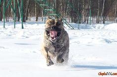 Mal, mas feliz foto do cão