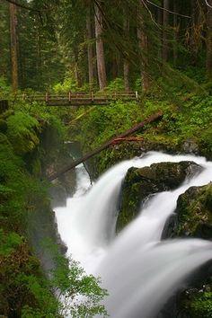 Rain Forest Bridge ~ Olympia National Park, Washington by gladys