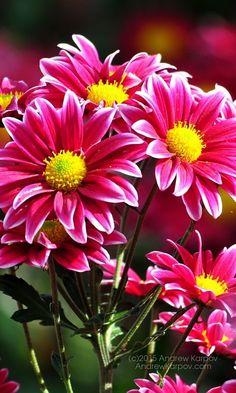 Картинки по запросу красивые цветы картинки обои