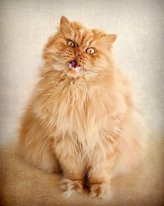 Meet Garfi. He may be the angriest cat we've seen since Tardar Sauce, also known as Grumpy Cat.