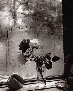 Josef Sudek Last Roses, Prague 1956
