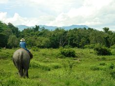 A mahout and his elephant here at the Golden Triangle Asian #Elephant Foundation (GTAEF). #Thailand #landscape