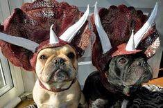 Triceratops Dogs