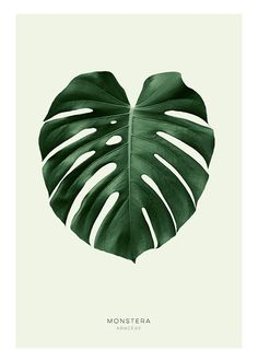 Green monstera, julisteet