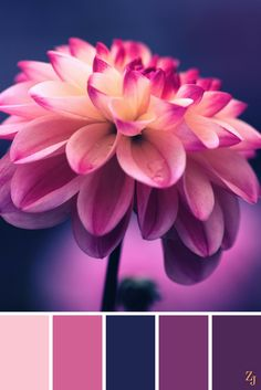ZJ Colour Palette 96 #colourpalette #colourinspiration