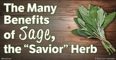 Sage is an exceptional herb that doesn't just add flavor to food, but it can also deliver a variety of health benefits. Know the many benefits of sage herb to your overall health. http://articles.mercola.com/herbs-spices/sage.aspx